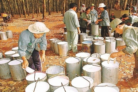 Ngành cao su Việt Nam
